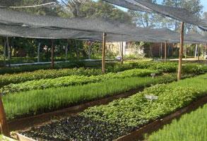 Estudiantes de Ingeniería de Tucumán automatizaron un vivero forestal