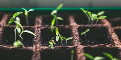 Agro: Tecnología aplicada en semillas para determinar su calidad